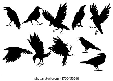 Set of black silhouette raven bird in different poses cartoon crow design flat vector animal illustration isolated on white background