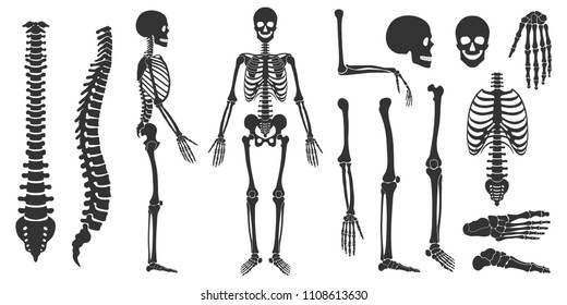 Set of black silhouettes of skeletal human bones isolated on white background. Vector illustration
