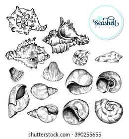 Set of black sketch seashell. Vector illustration for your design
