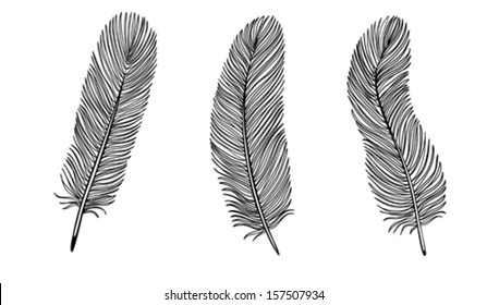 Set of Black and White Feather. Many similarities to the author's profile