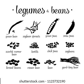 Set of black and white legumes and beans vector illustration isolated on white background. Black silhoeuette different legumes.