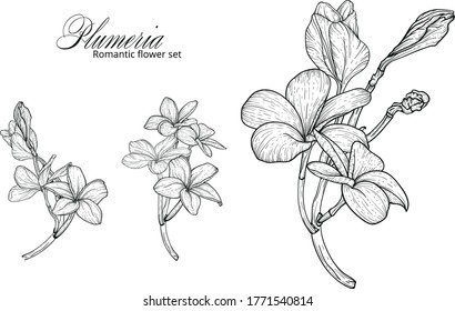 a set of black and white plumery colors. Plumeria. Vector flowers.