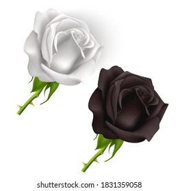 Set of Black white Roses isolated on white background, roses in photorealistic style, Vector eps 10 format