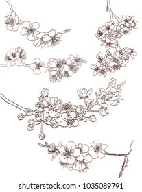 set of blossoming tree line art hand drawing. spring stylish background elements with sakura flowers outline. vector