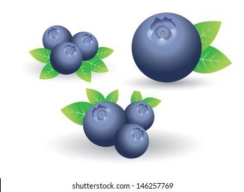 set of blueberry