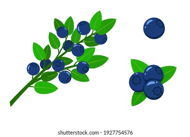 Set of blueberry - blueberries on a branch and single berries. Bilberries isolated on a white background. Stock vector illustration.
