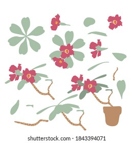 Set of boho tropical house plants, branches ande leaves. Desert rose in a pot. Stock flat vector illustration.