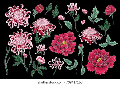 Set of botanical flowers chrysanthemum and peonies. Vector hand draw illustration for your design.