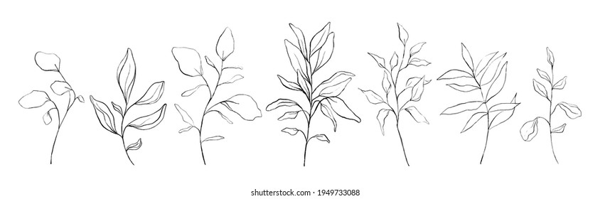 Set of botanical line art floral leaves, plants. Hand drawn sketch branches isolated on white background. Vector illustration