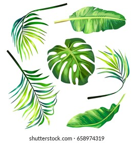 Set of botanical vector illustrations of tropical palm leaves in a realistic style. Print, template, design element
