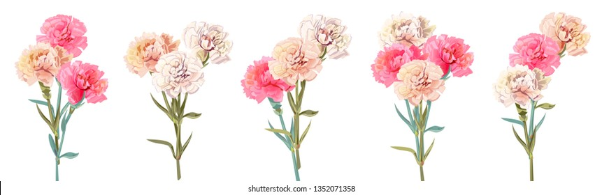 Set bouquets of carnation schabaud. White, pink, red flowers, white background. Digital draw, illustration for Mother's Day, Victory day in watercolor style, panoramic view, vintage, vector