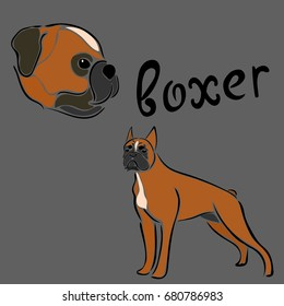 Set of boxer dog breed. Vector sketch in minimal style. Simple emblem design for pet shop, zoo ads, label design, animal food package element. Animal badge art, cute cartoon style, hand drawn image.