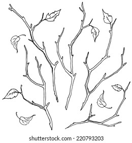 Set of branches. Autumn branches and leaves, hand-drawn design elements.