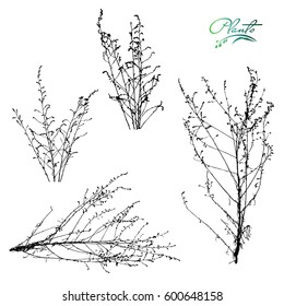 Set of branches and dry inflorescences. Collection of medicinal plants. Detailed vector illustration.