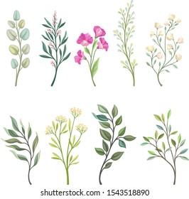 Set of branches of field plants. Vector illustration on a white background.