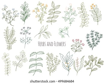 Set of branches, flowers and herbs with leaves Isolated on white background. Hand drawn vector decorative elements can be used for holiday cards, wedding invitation, postcard, flyer, banner or website