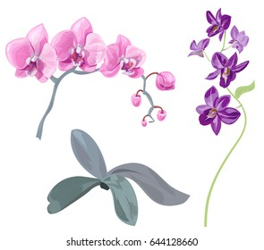 Set branches orchid (Phalaenopsis, Dendrobium), pink, purple flowers, tropical plants, green stem and leaves on white background, digital draw, realistic vector botanical illustration for design