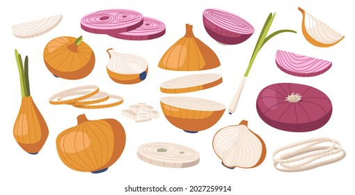 Set of Brown and Purple Onions, Vegetable, Natural Garden Plant, Veggies Culture. Healthy Food, Eco Farm Production Organic Ripe Bulb with Green Leaves, Design Elements. Cartoon Vector Illustration