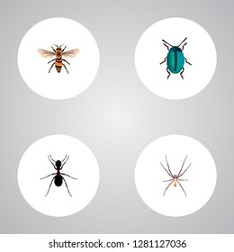Set of bug realistic symbols with housefly, insect, arachnid and other icons for your web mobile app logo design.
