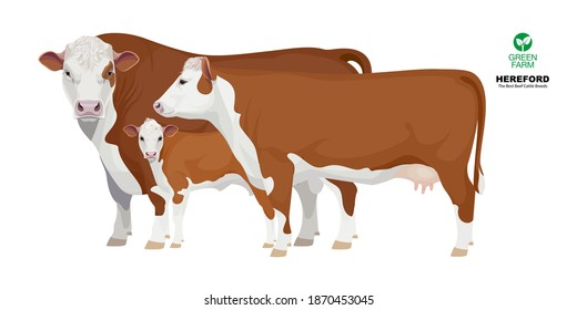 Set Bull, Cow, Calf. Hereford - The Best Beef Cattle Breeds. Farm animals. Vector Illustration.