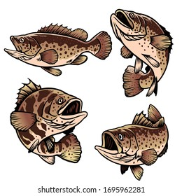 set bundle of grouper fish