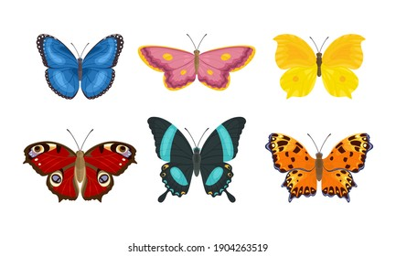 Set of butterflies of different colors and shapes isolated on  white background. Beautiful flying insects. Vector illustration in cartoon flat style.