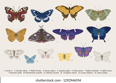 Set butterflies. Vector vintage classic illustration. Colorful