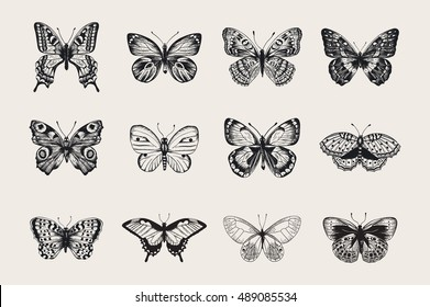 Set of butterflies. Vector vintage classic illustration. Black and white