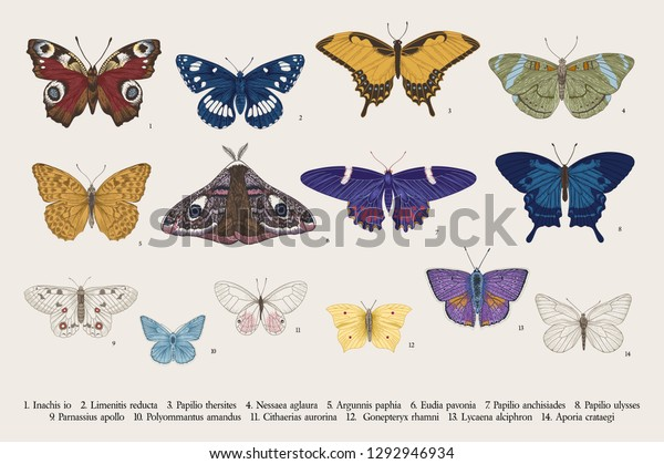 Set butterflies. Vector vintage classic illustration. Colorful
