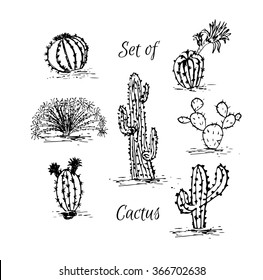 Set of cactus. Hand drawn succulent ornament. Ink illustration. A set of cacti - line drawing. Vector illustration of a cactus isolated on a white background. Cute hand drawn vector cactus .