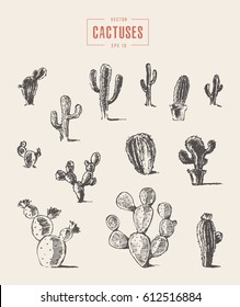 Set of cactus, hand drawn vector illustration