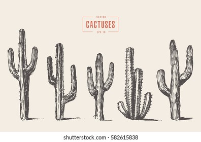 Set of cactuses, hand drawn vector illustration