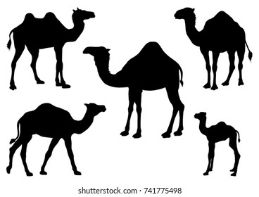 Set of Camel  Silhouettes - Vector Illustration