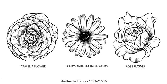 Set of camelia, chrysanthemum and rose flowers hand drawn, black isolated on white background. Vector illustration. Eps10