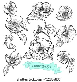 Set of camellia. Vector illustration