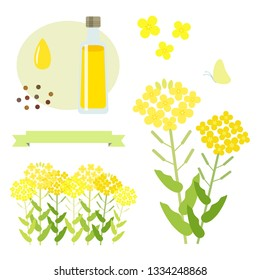 Set of canola flower and oil / vector eps 10 illustration