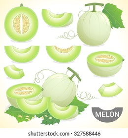 Set of cantaloupe honeydew honey melon fruit in various styles vector format