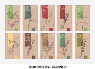 """Set of cards """"Collection of spices and seasonings"""". Craft packaging template with drawings of herbs and spices. Stylish craft."""