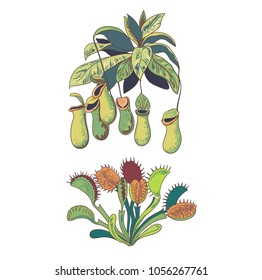 Set of carnivorous plants, Venus flytrap and nepenthes