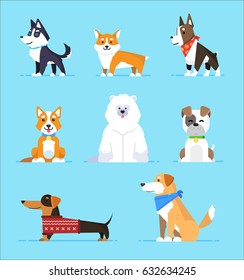 Set cartoon characters dogs in flat style on blue background