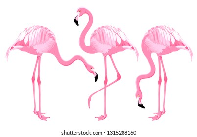 Set of cartoon exotic birds, Pink flamingos in different poses. Vector illustration. Isolated on white background.