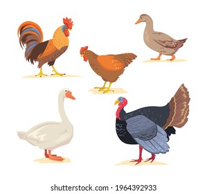 Set of cartoon farm, poultry birds flat vector illustration. Goose, chicken, rooster, duck, turkey in white background. Farm, poultry, bird, animal, food concept for banner design or landing page