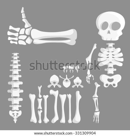 Set Cartoon Human Bones Skeleton Parts Stock-Vektorgrafik ...