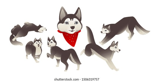 Set of cartoon siberian husky dogs, domestic animals and funny animals. Siberian husky dogs jump and lie, stand and play. Isolated vector set of illustrations with a husky dog.