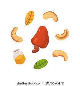 Set cashew nut vector illustration in cartoon style. Organic food.