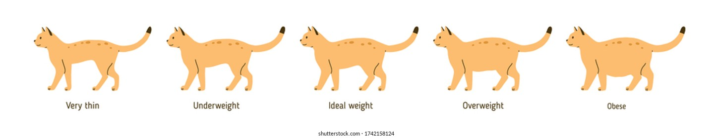 Set of cat body condition vector flat illustration. Colorful cute pet very thin, underweight, ideal weight, overweight and obese isolated on white. Different domestic animal shapes with inscriptions