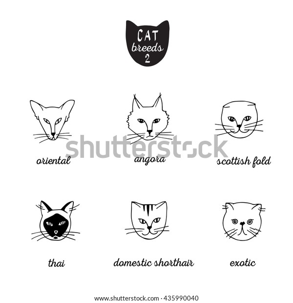 Set Cat Breeds Names 2 Oriental Stock Vector (Royalty Free) 435990040