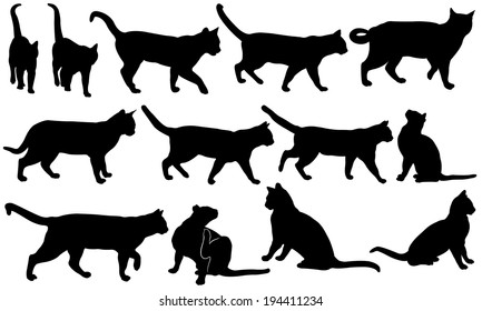 set of cats isolated on white