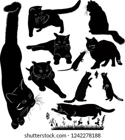set of cats power isolated on white background