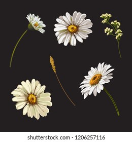Set with chamomile flowers. Vector botanical illustration